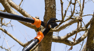 tree pruning in Plano, TX